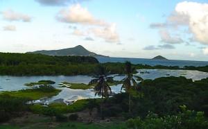 Petit Carenage Mangroves